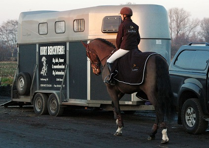 Excellence Products For Horses